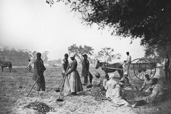 Sjetva slatkih krumpira na plantaži Jamesa Hopkinsona, oko 1862/63. godine (izvor).
