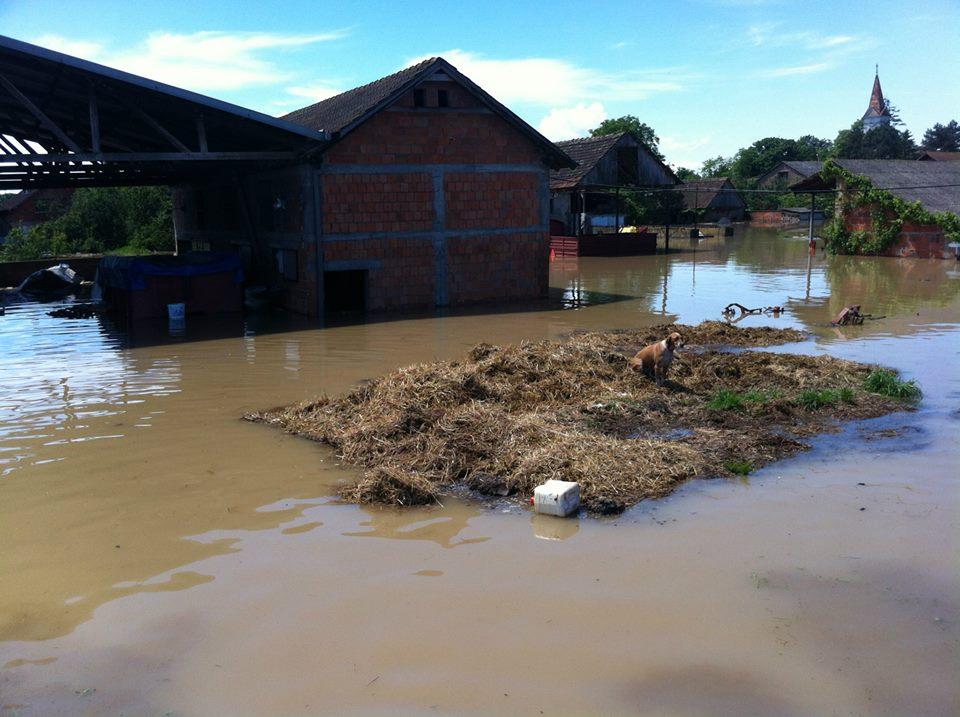 Poplava u Gunji, zapadnosrijemskom selu uz lijevu obalu Save, svibanj 2014. godine (izvor: Dalibor Platenik - Dali prema Creative Commons licenci).